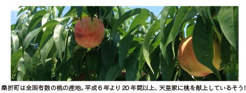 福島県桑折の桃